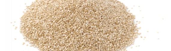 Sådan dyrker du Quinoa