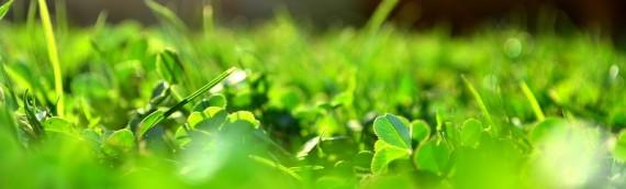 Få en flot græsplæne til sommer