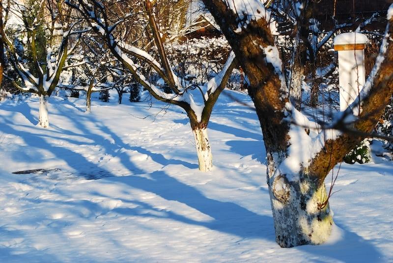 Sådan gør du haven klar til vinter