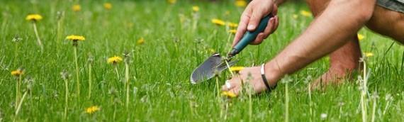 Tre gode råd til bekæmpelse af ukrudt i haven
