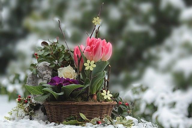 Sådan holder du liv i haven i vintermånederne