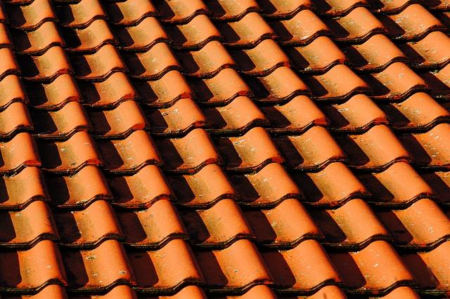 Skal algerne på taget fjernes?