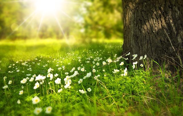 Er din have klar til varmere måneder?
