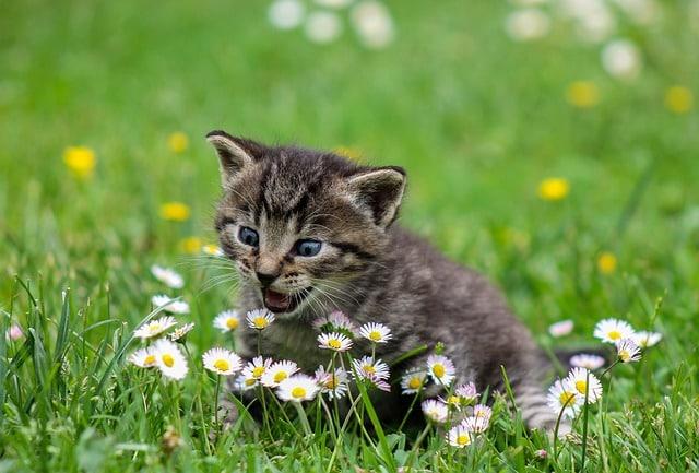 katte i haven