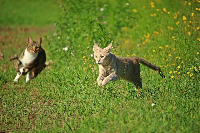 katte ud af haven