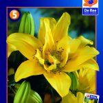 Asiatisk Lilje Double Fatamorgana -139 - Lilium, Asiatic...