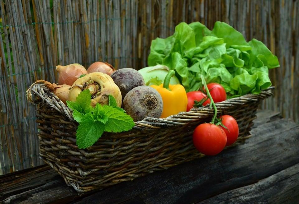Den økologiske køkkenhave