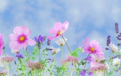 Inspirationskilder til din have