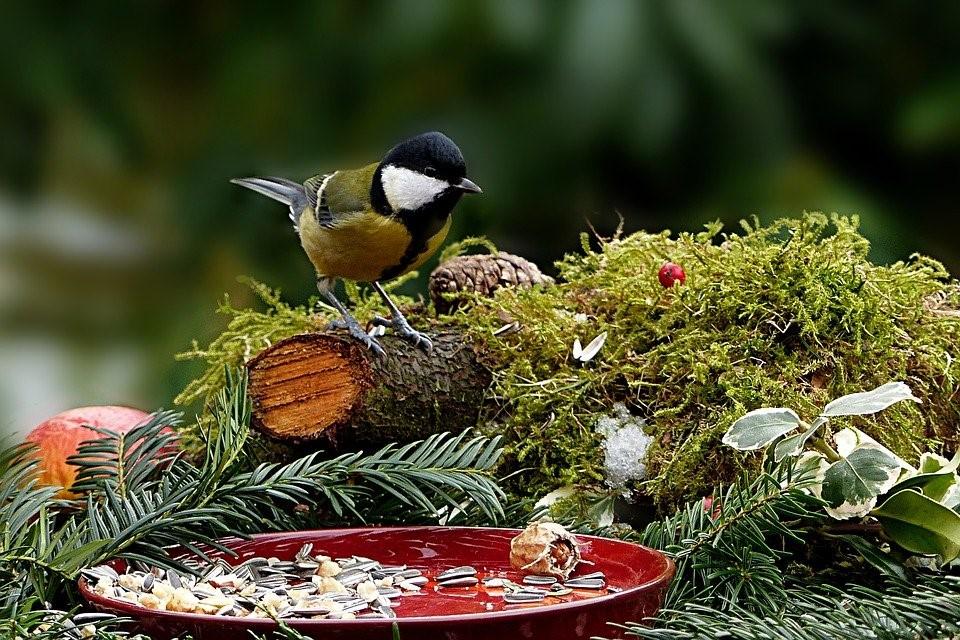 Få mere luft og nyd din have