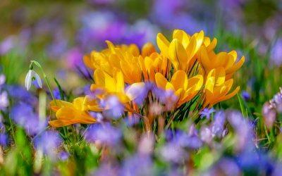 Gør haven forårsklar