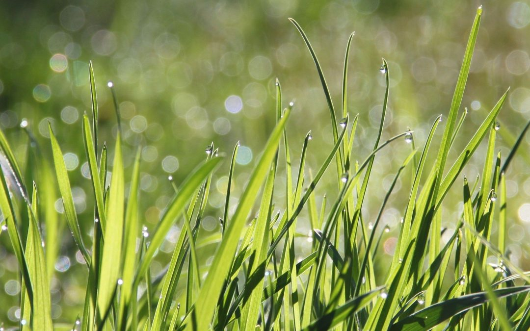 Opskriften på den perfekte græsplæne