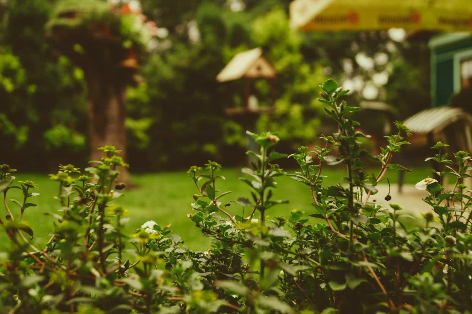 Få det bedste ud af sensommeren i din have